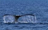 """Words, Wine, Whales! """"Message in A Bottle"""" Writing Workshop Reg Opens 3/3"""